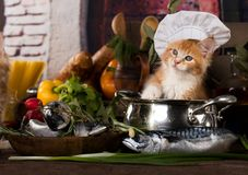 Kitten and fish fresh in the kitchen royalty free stock images