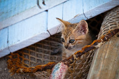 Kitten in fishing net Royalty Free Stock Photo
