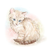 Kitten on the floral background Royalty Free Stock Images