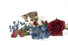 Kitten and flower. A kitten walks over a colorful arrangement on white background stock images