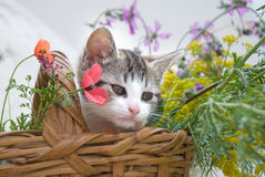Kitten in flower basket Stock Image