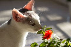 Kitten and flower Stock Photography