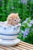 Kitten in flower pot Royalty Free Stock Photography