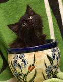 Kitten and a flower pot Royalty Free Stock Photo