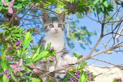Kitten in Flowering Tree. Small gray kitten sitting in a flowering tree stock photos