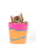Kitten in a flowerpot stock images