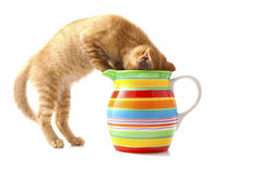 Kitten in flowerpot Stock Image