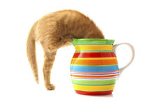 Kitten in flowerpot Stock Image