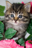 Kitten in flowers. Stock Photos