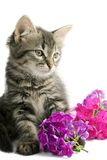 Kitten with flowers Royalty Free Stock Photos