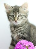 Kitten with flowers Royalty Free Stock Photo