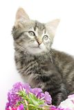 Kitten with flowers Stock Photo