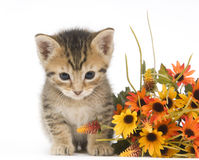 Kitten and flowers Stock Photo