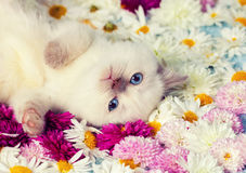 Kitten on the flowers Royalty Free Stock Images