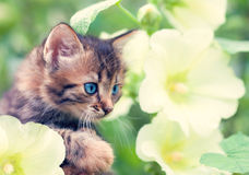 Kitten in flowers Royalty Free Stock Photo