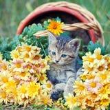 Kitten in flowers Stock Photography