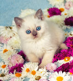 Kitten in flowers Stock Image