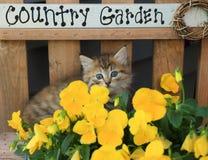 Kitten In Flowers Royalty Free Stock Photos
