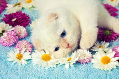 Kitten in flowers Royalty Free Stock Photography