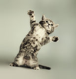 Kitten Stock Photos