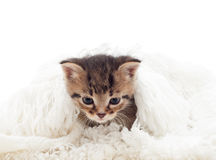 Kitten in a fluffy white cover Stock Image