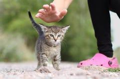 Kitten fondling Royalty Free Stock Photo