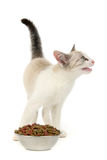 Kitten food Royalty Free Stock Images