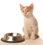 Kitten at food dish Royalty Free Stock Image