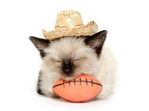 Kitten with football and hat Stock Photography