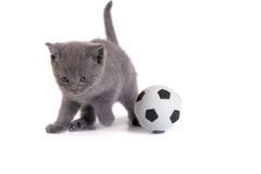 Kitten and a football on a white background Royalty Free Stock Photos