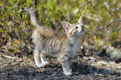 Kitten in the forest Stock Photos