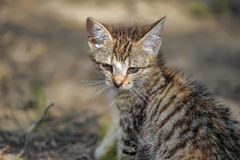 Kitten in the forest Royalty Free Stock Photos