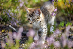 Kitten in the forest Royalty Free Stock Images