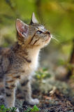 Kitten in the forest Stock Image