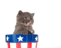 Kitten and Fourth of July stock photos