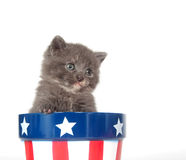 Kitten and Fourth of July Royalty Free Stock Photo