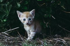 Kitten fresh from hiding Royalty Free Stock Photography