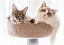 Kitten friends Royalty Free Stock Image