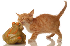 Kitten and frog Stock Photography