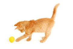 Kitten funny red catch ball royalty free stock image