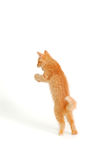 Kitten funny red catching Royalty Free Stock Photos