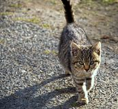 Kitten at garden Royalty Free Stock Images