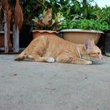 Kitten in garden. Happy play outdoor. Stock Photography