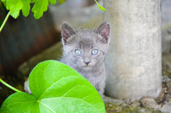 Kitten in a garden Royalty Free Stock Images