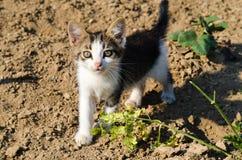 Kitten in a garden Stock Photography