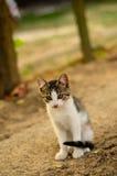 Kitten in a garden Royalty Free Stock Photo
