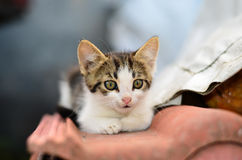 Kitten in a garden. Cute  Little kitten  with amazing eyes sitting on stack of roofs  in a garden Stock Photography