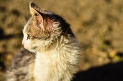 Kitten in a garden Stock Image
