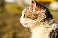 Kitten in a garden Royalty Free Stock Photos