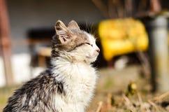 Kitten in a garden Stock Photo